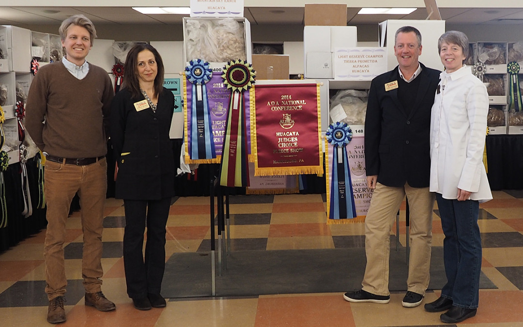 Belvedere Awarded Judge's Choice at the 2014 AOA National & World Fleece Show